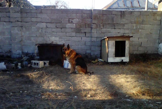 ВДонецкой области собаки загрызли молодого человека насмерть